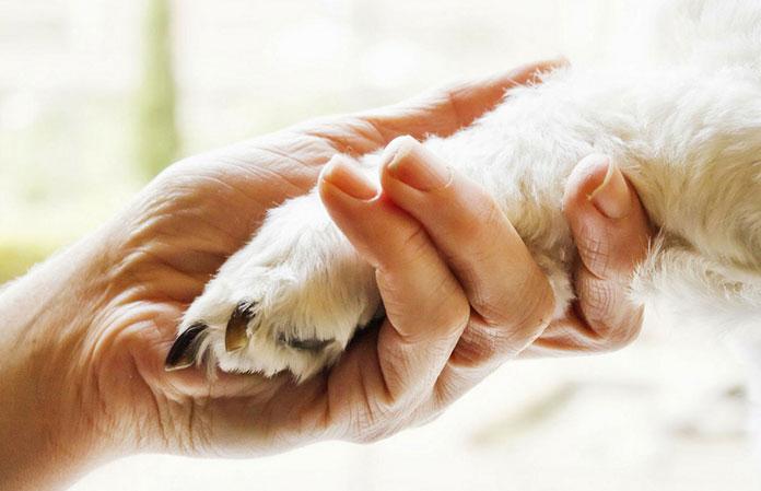 Cos'è la pet terapy