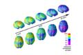 La maturazione del cervello